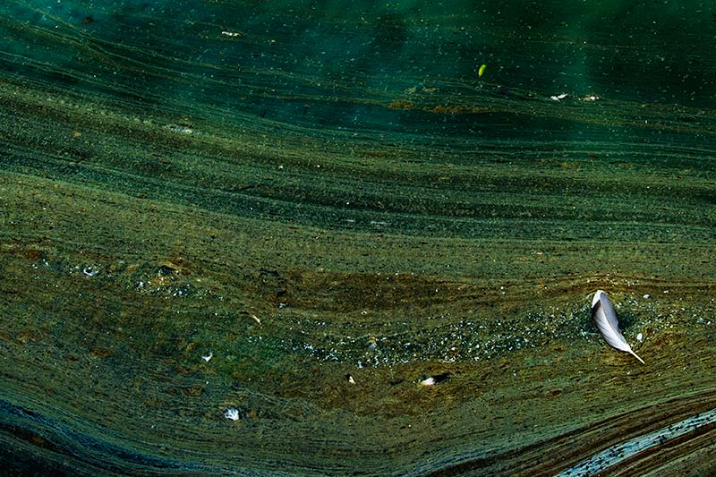 Antonia Zimmermann Naturelines