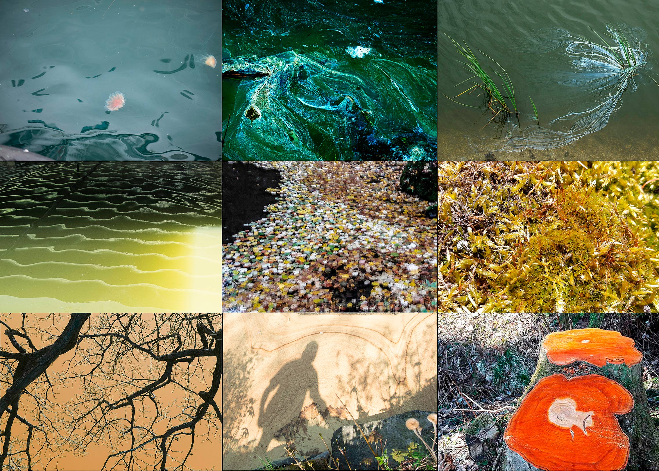 CollageGemäldeder-Natur_web