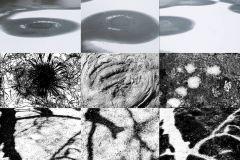 CollageGrafikder-Natur_web